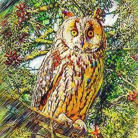 Mihai Piltu - Owl