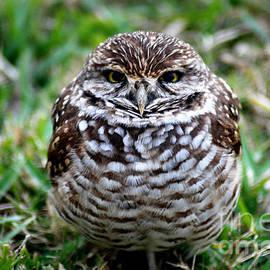 Oksana Semenchenko - Owl. Best Photo