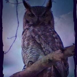 Bobbee Rickard - Owl on Watch