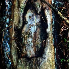 Colette V Hera  Guggenheim  - Owl Tree Autumn