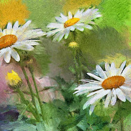 Gene Healy - Oxeye daisies
