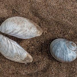 Gary Slawsky - Packman Shells On The Beach