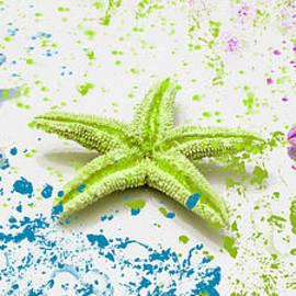 Mechala  Matthews - Paint Spattered Star Fish