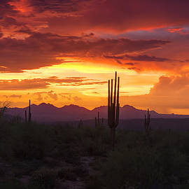 Saija  Lehtonen - Paint the Sonoran Skies