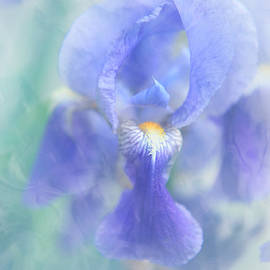 Jenny Rainbow - Painted Blue Iris