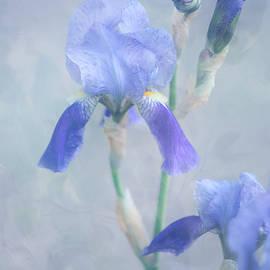 Jenny Rainbow - Painted Blue Irises. Vertical