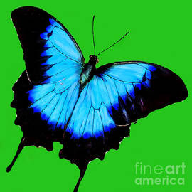 Bob and Nadine Johnston - Painted Butterfly