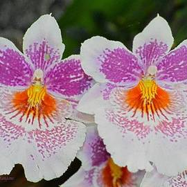 Sonali Gangane - Painted Orchids