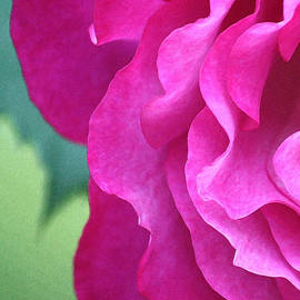 The Art Of Marilyn Ridoutt-Greene - Painted Rose
