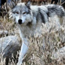 Athena Mckinzie - Painted Wolf