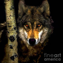 Bob and Nadine Johnston - Painting ... Wolf in Aspen Grove