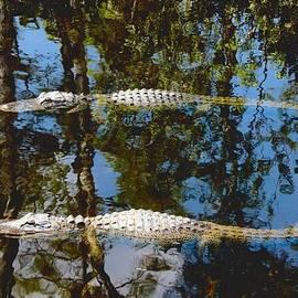 Rudy Umans - Pair of American Alligators