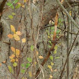 Rowena Throckmorton - Pale Autumn Leaves