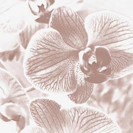 Lali Kacharava - Pale beige orchid
