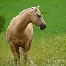 Torbjorn Swenelius - Pale Brown Horse