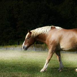 Kathleen Struckle - Pale Horse