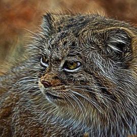 Ernie Echols - Pallas Cat Digital Art