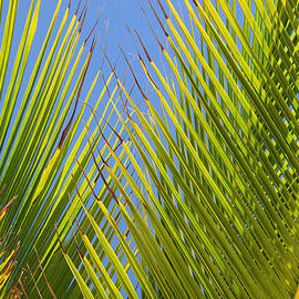 Allan Van Gasbeck - Palm Fronds Abstract