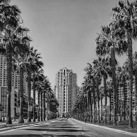 Hanny Heim - Palm-Lined Parkway B/W