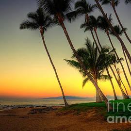 Kelly Wade - Palm Sunrise