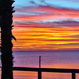 Norman Johnson - Palm Sunset