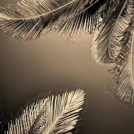 Allan Van Gasbeck - Palm To Palm