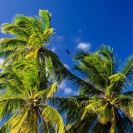 Jess Kraft - Palm Tree and Blue Sky