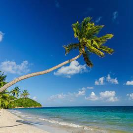 Jess Kraft - Palm Tree over Beach