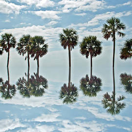 Aimee L Maher Photography and Art - Palm Tree Reflection