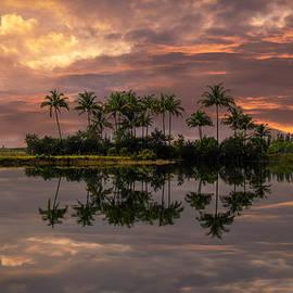 Debra and Dave Vanderlaan - Palm Trees at Sunset