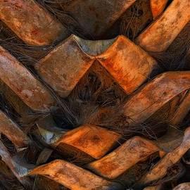 Lauren Leigh Hunter Fine Art Photography - Palms