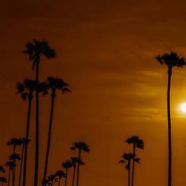 David Millenheft - Palms Silhouettes at Sunset