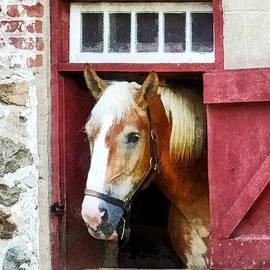 Susan Savad - Palomino by Barn Door
