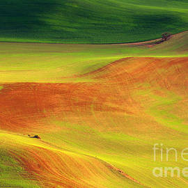 Beve Brown-Clark Photography - Palouse Patterns
