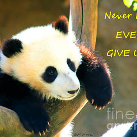 Tap On Photo - Panda Baby Bear Never Ever Ever Give Up