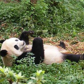 Noa Yerushalmi - Panda on back