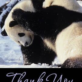 Chris Scroggins - Panda Thank You Cards