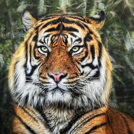 Joachim G Pinkawa - Panthera Tigris II