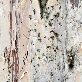 Karen E Camilleri - Paper Bark Astract