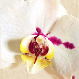 Ella Kaye Dickey - Paper White Orchid