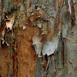 Denise Clark - Paperbark Abstract number two