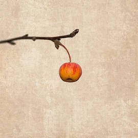 Alexander Senin - Paradise Apple 5 - Square