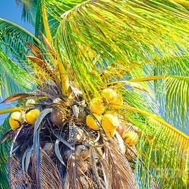 Sharon Mau - Paradiso Tropicale - and the sky sings