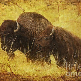 Lianne Schneider - Parent and Child - American Bison