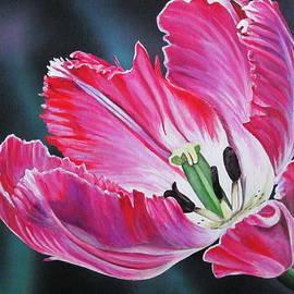 Lillian  Bell - Parrot Tulip