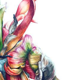 Marie Burke - Parrot Tulip