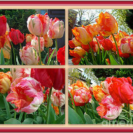 Mother Nature - Parrot Tulips in Springtime Philadelphia