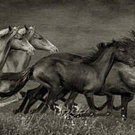 Priscilla Burgers - Paso Peruvian Horses on the Run