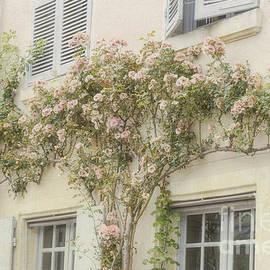 Elaine Teague - Pastel Climbing Roses
