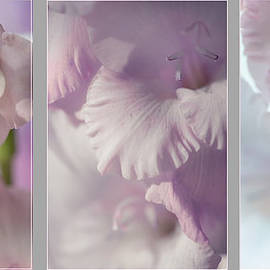 Jenny Rainbow - Pastel Gladiolus Triptych